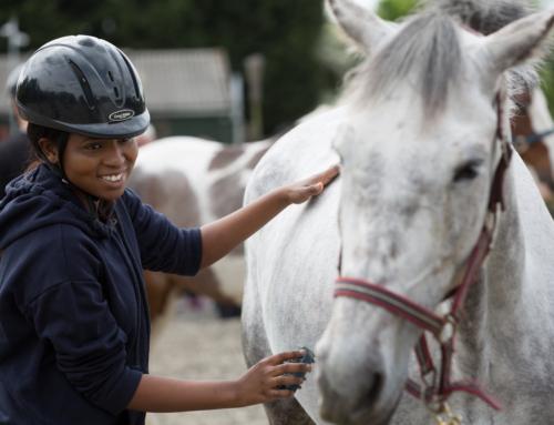 Strength in Horses